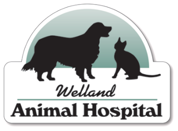 Welland Animal Hospital